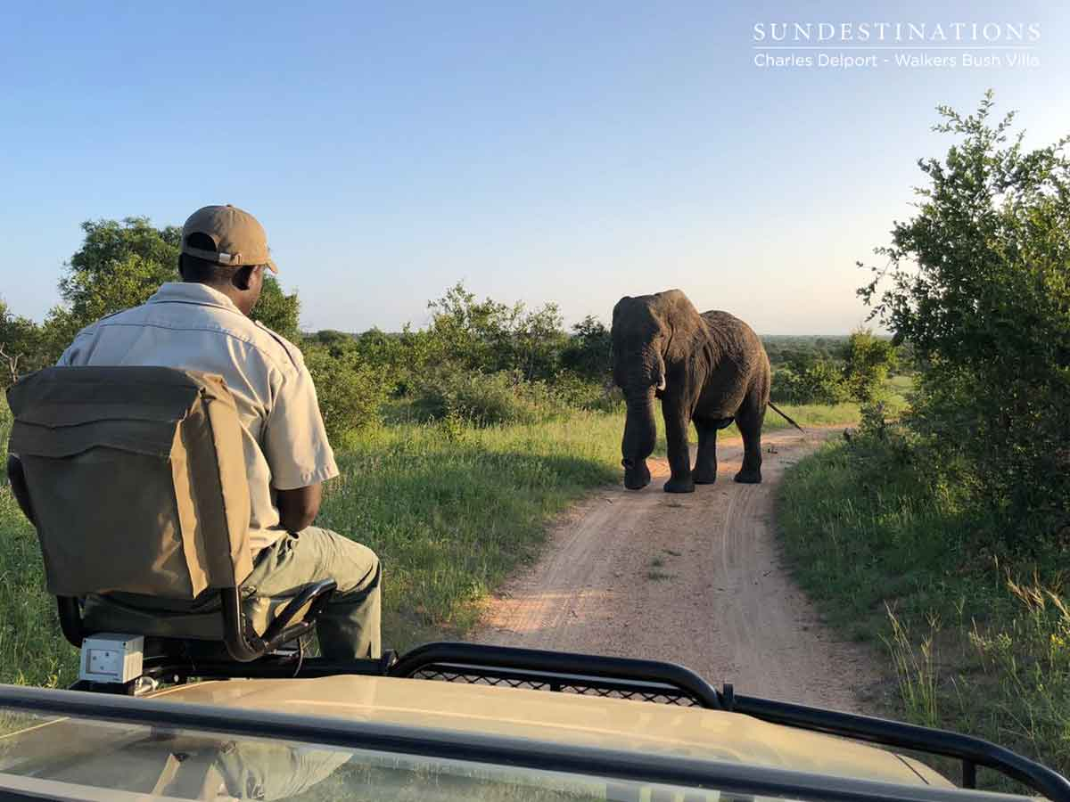 Elephants at Walkers Bush Villa