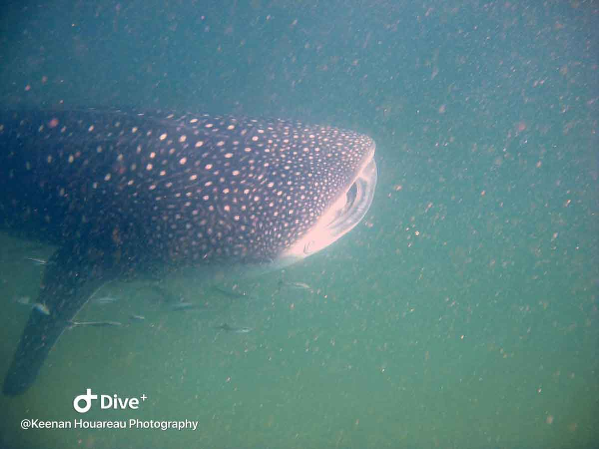 Sava Dunes : Snorkel with Whale Sharks and Manta Rays in Mozambique