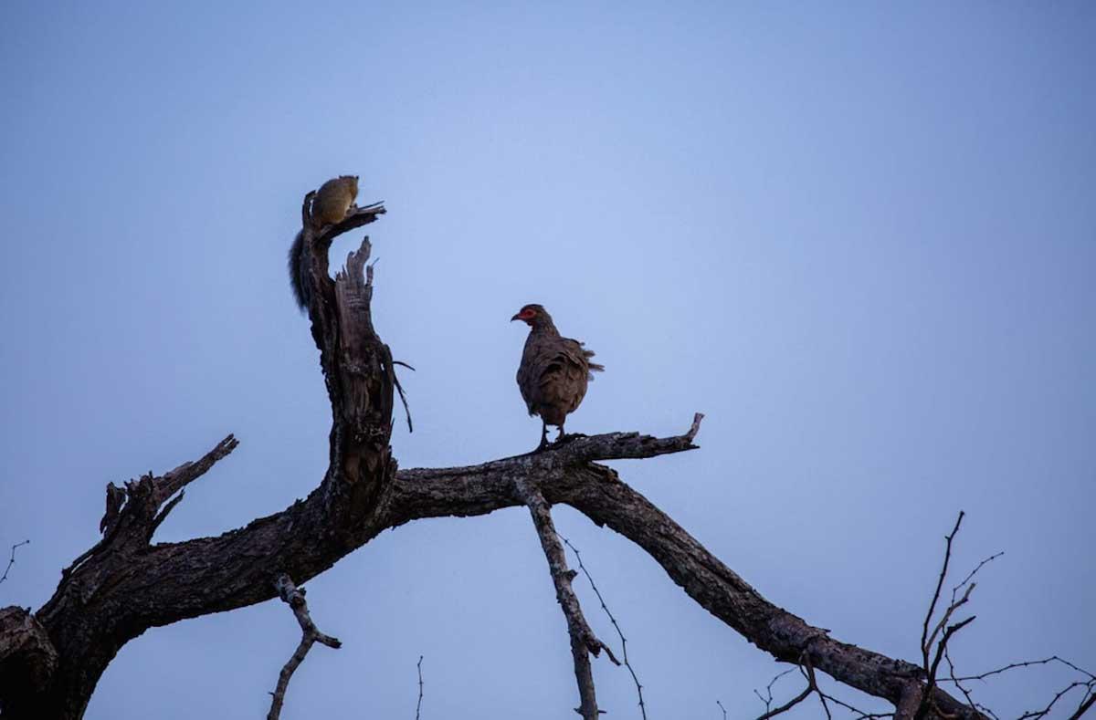 Nsala Birding