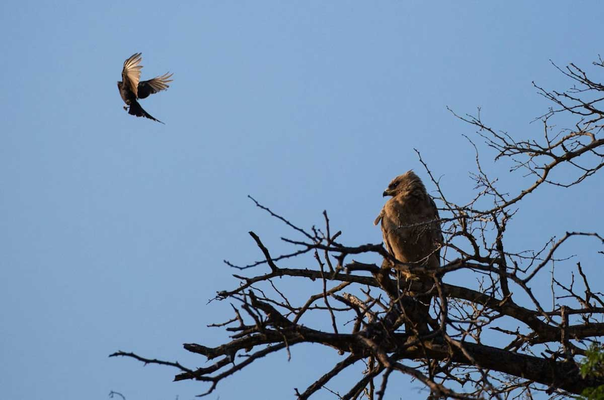 Raptors in the Kruger