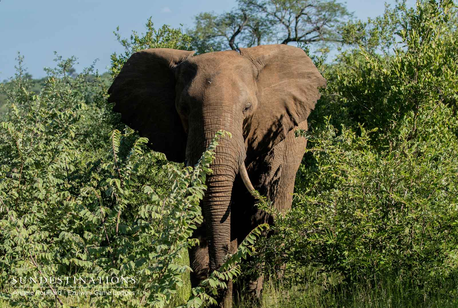 Elephants in Balule Nature Reserve