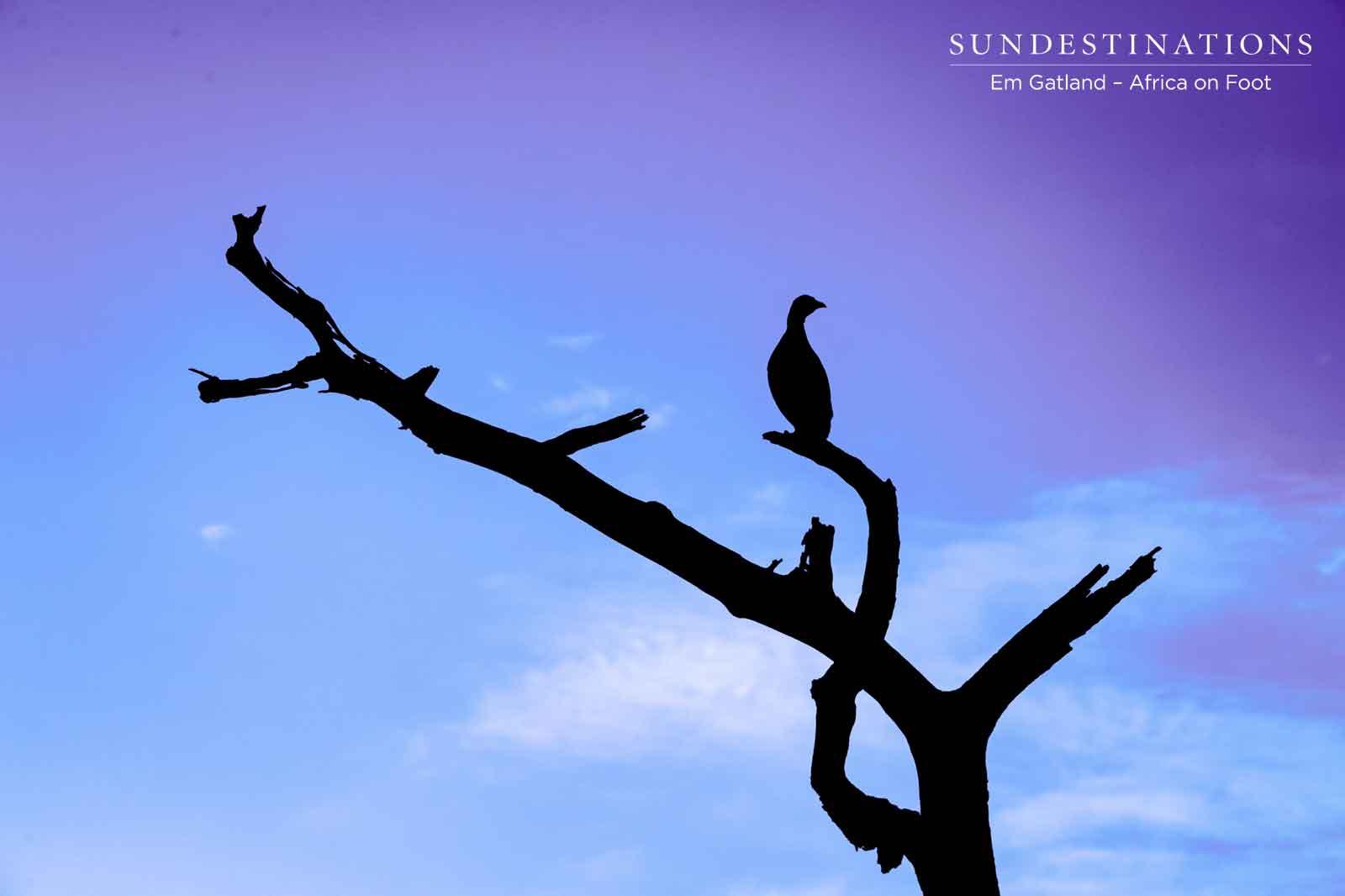 Indigo Sky in Kruger