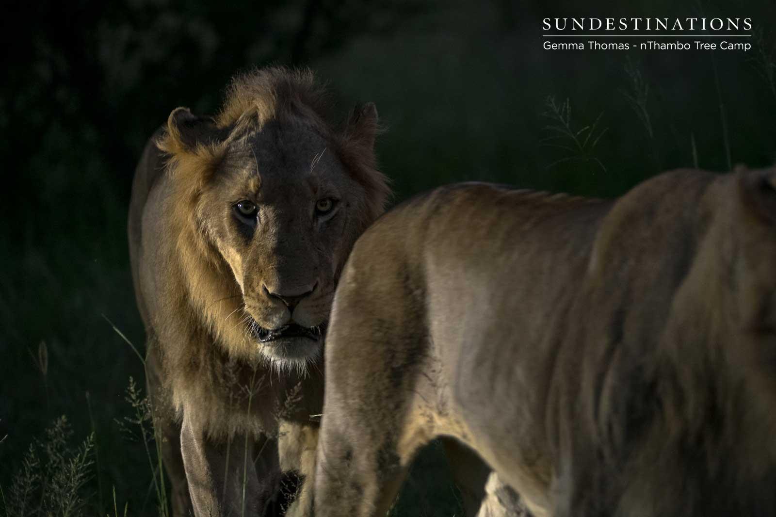Vuyela Lions at nThambo
