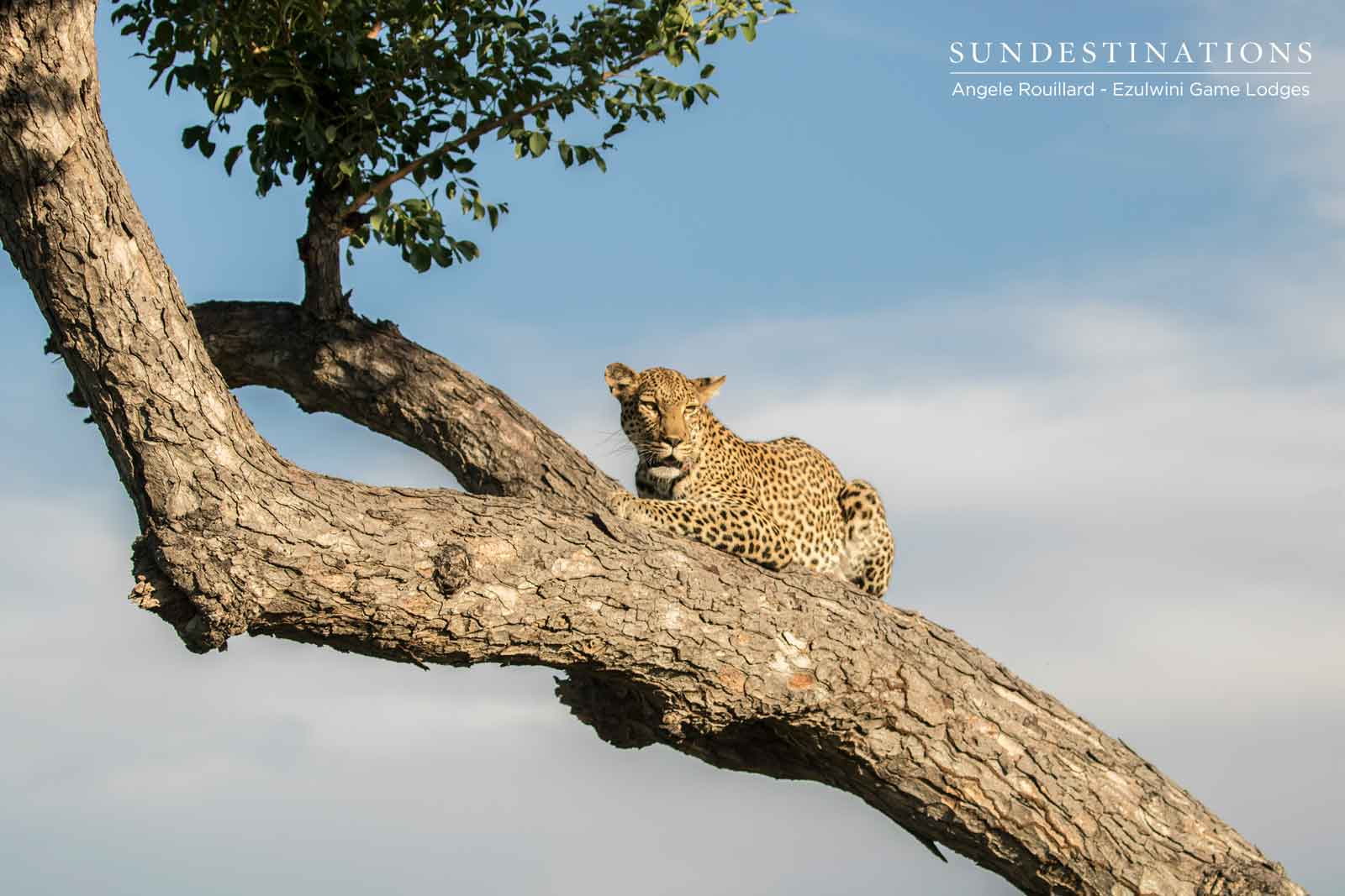Leopards of Ezulwini Game Lodges