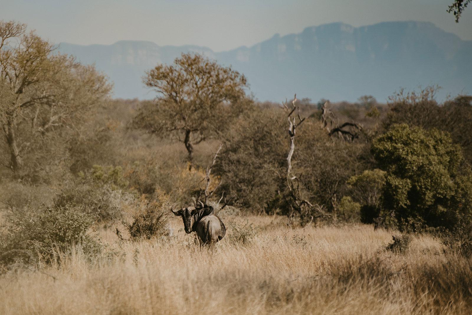 Safari Sighting Arrival