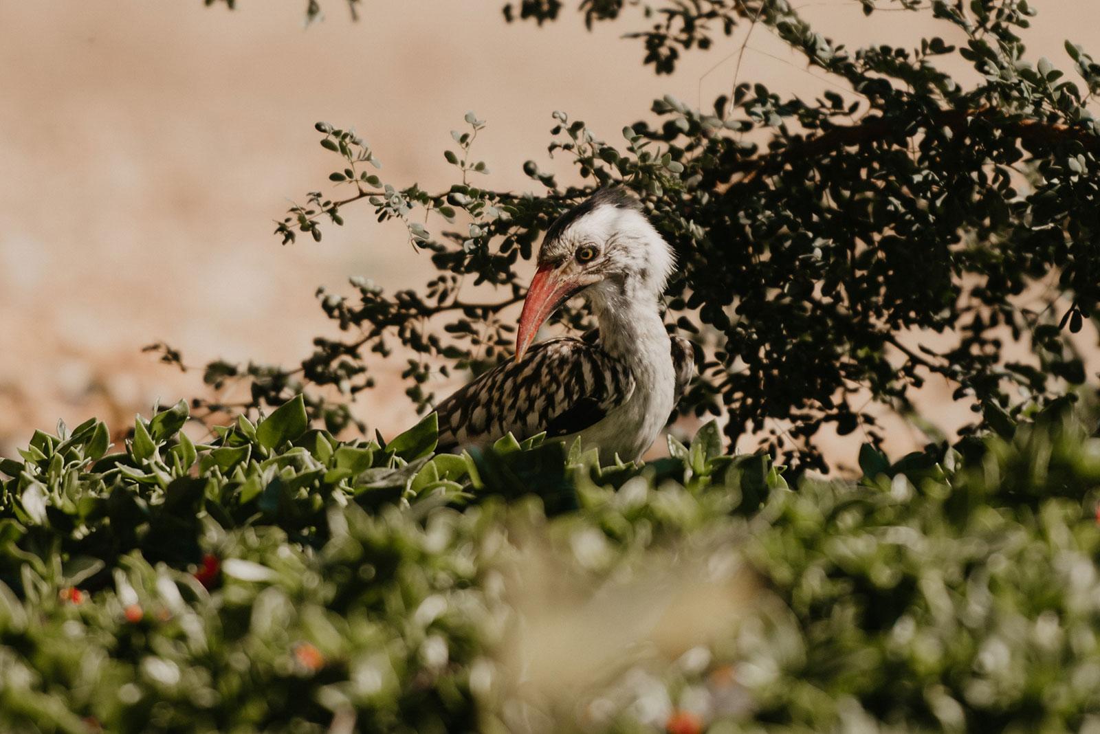 nThambo Bird Watching