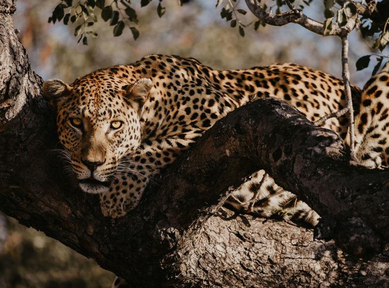 #AfricaTravel | Meg Donati Tells All In Her Safari Blog