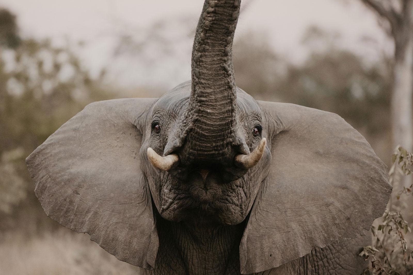 nThambo Safari Big-Five