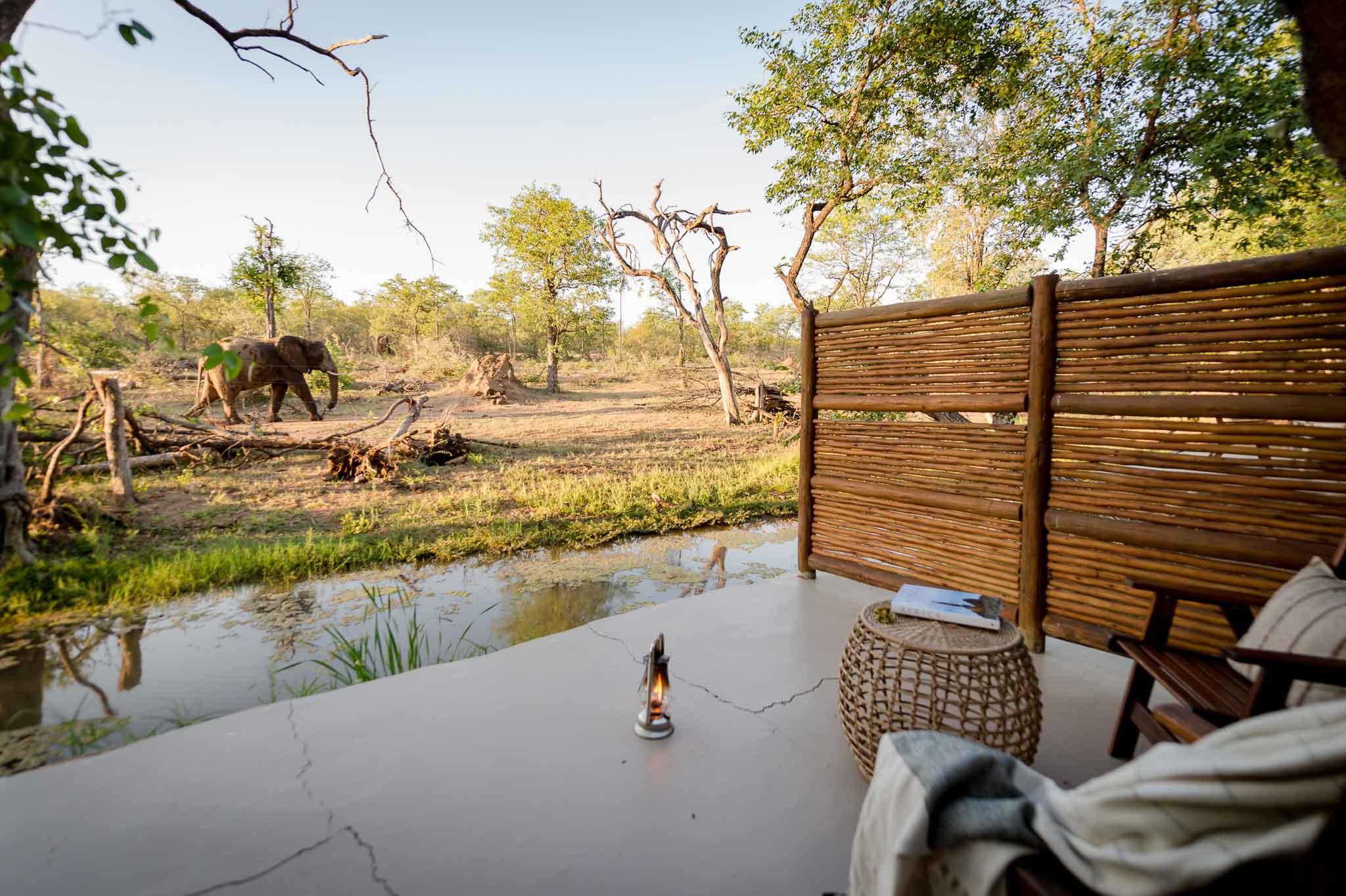Chacma Elephants