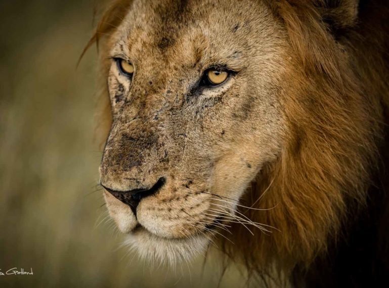Vuyela Lions Klaserie