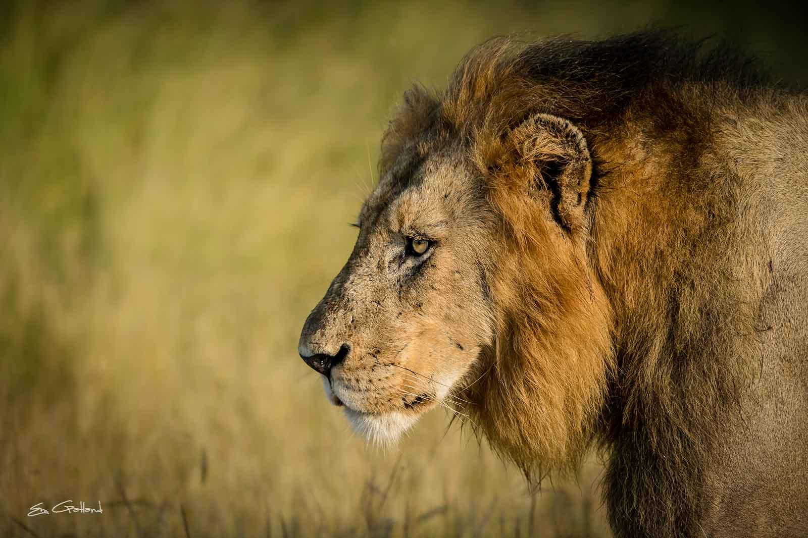 Vuyela Lion Pride Update