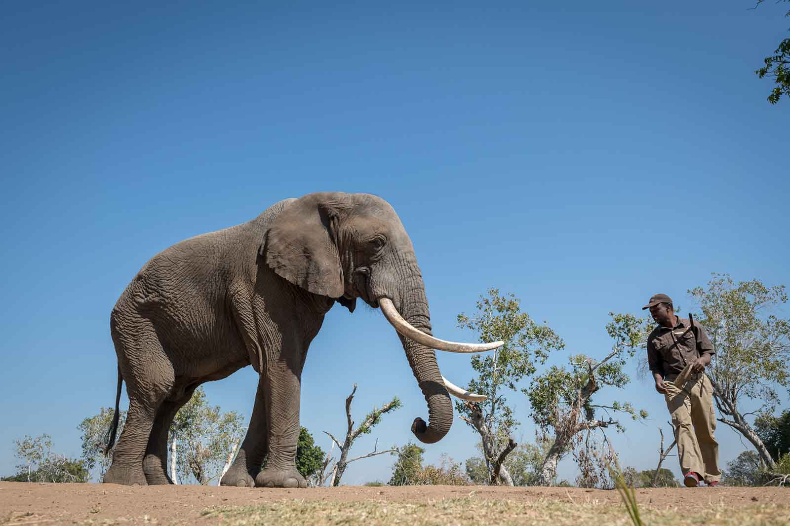 Elephant Cafe Zambia